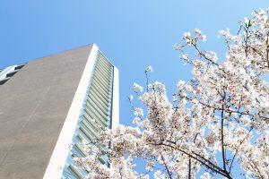 1号館裏の桜